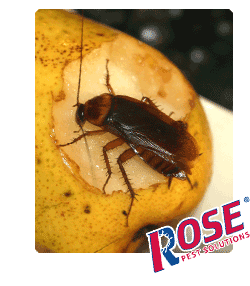 cockroach on fresh fruit in michigan