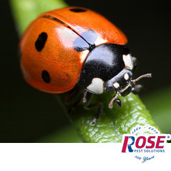 Deter Lady Bugs And Other Summer Insects