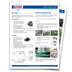 Make Sure Your Property Is Rat Free With Rose's Rat Prevention Tips