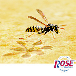 Don't Worry About Wasps And Other Stining Insects This Summer