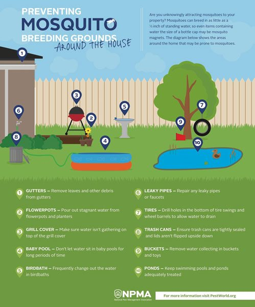 Blog How To Control Mosquitoes In Your Backyard