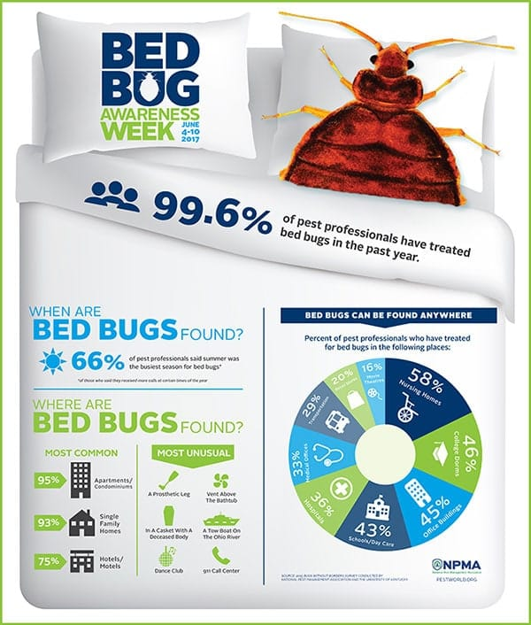 infographic - where and when bed bugs can be found