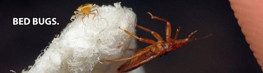 Bed Bug Treatment Troy Michigan