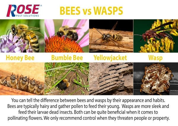 know your stinging insects. learn how to tell a wasp from a bee