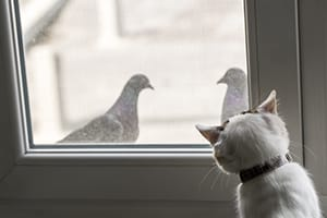 cat watching pigeons through glass door