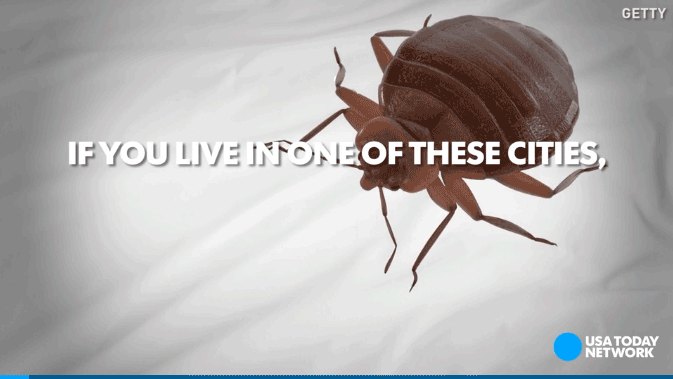 top u.s. cities for bed bugs